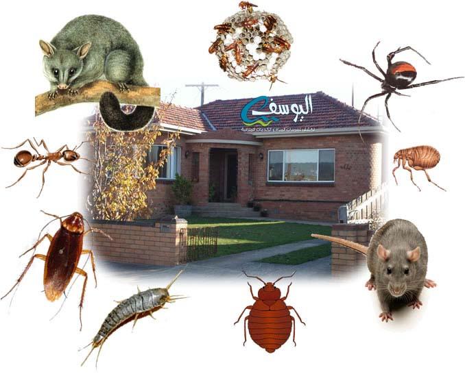 شركة مكافحة الحشرات والقوارض