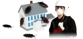 أفضل شركة مكافحة الحشرات