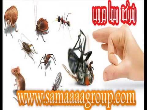 شركة مكافحة حشرات بالرياض-سما جروب