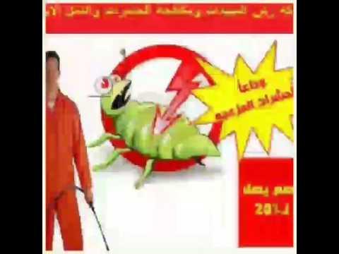 شركة مكافحة حشرات بالرياض 0507038882 ورش مبيدات بالرياض