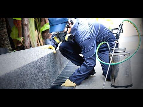 شركة مكافحة الحشرات بالرياض  0500830105 مؤسسة الضمان