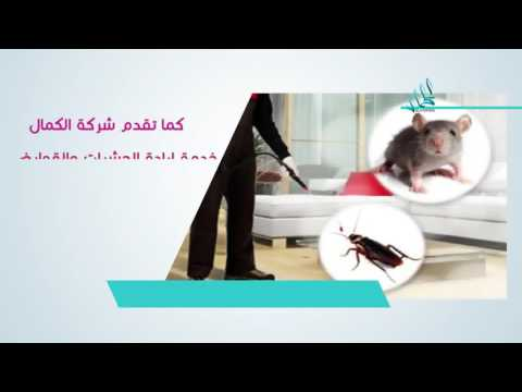 افضل شركة مكافحة حشرات بالرياض وخارج الرياض 0595055756 الكمال المبيدات أمنة ضمان ابادة فورية