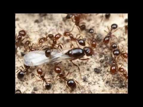 افضل شركة مكافحة الحشرات  بالرياض 0556563510